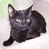 Adopt A Pet :: K-Piper4-Zeus - Colorado Springs, CO