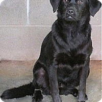 Labrador Retriever Mix Dog for adoption in Tahlequah, Oklahoma - Aretha
