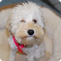 Adopt A Pet :: Flopsy - Buffalo, WY