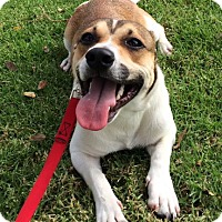 Adopt A Pet :: Dundee - Mission Viejo, CA