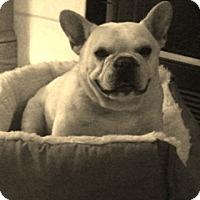 Adopt A Pet :: Tater - Columbus, OH