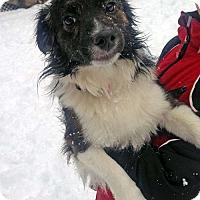 Adopt A Pet :: JR - Sudbury, MA