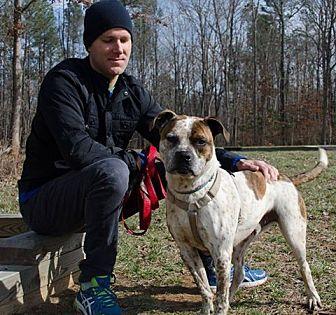 Boxer Mix Dog for adoption in Midlothian, Virginia - Fitz