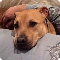 Adopt A Pet :: Levi - Rockaway, NJ