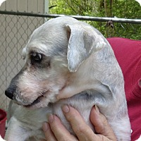 Adopt A Pet :: Saber - Crump, TN
