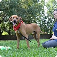 Adopt A Pet :: Randall - Lafayette, LA