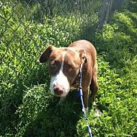 Adopt A Pet :: Red Junior - Ravenna, TX