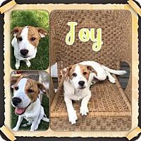 Adopt A Pet :: Joy - Genoa City, WI