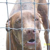 Adopt A Pet :: Bentley - Mexia, TX