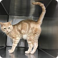 Adopt A Pet :: Dusty - Siler City, NC