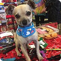 Adopt A Pet :: Rudy - Brea, CA