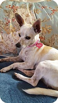 Chihuahua Mix Dog for adoption in Monrovia, California - Ellie