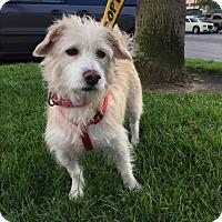 Adopt A Pet :: Laverne - Carlsbad, CA