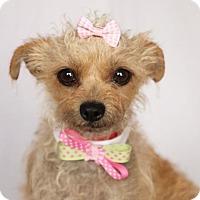Adopt A Pet :: Missy - Carrollton, TX