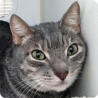 Adopt A Pet :: Elliott - Prescott, AZ