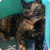 Adopt A Pet :: Julia - Breinigsville, PA