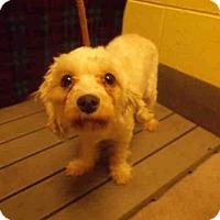 Adopt A Pet :: *FAITH - Upper Marlboro, MD