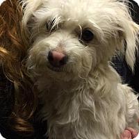 Adopt A Pet :: Marcy Williams - Fresno, CA