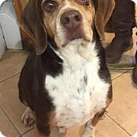 Adopt A Pet :: Chip - Middletown, NY
