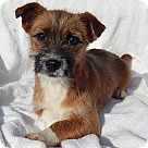 Adopt A Pet :: Brownie (7 lb) Video!