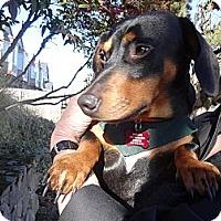 Adopt A Pet :: REX - Portland, OR