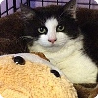 Adopt A Pet :: Poppy - Monroe, GA