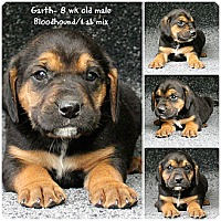 Adopt A Pet :: Garth - Evansville, IN