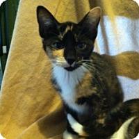 Adopt A Pet :: Chloe - Chesterfield, VA