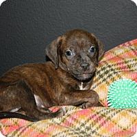 Adopt A Pet :: Grant - Lufkin, TX