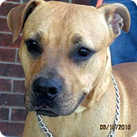 Adopt A Pet :: Copper - Germantown, MD