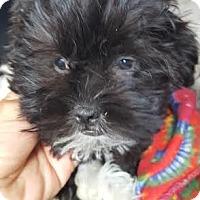 Adopt A Pet :: Hendrix - Algonquin, IL