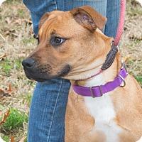 Adopt A Pet :: Peanut - Elmwood Park, NJ