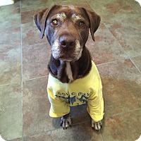 Adopt A Pet :: Mae West - Scottsdale, AZ