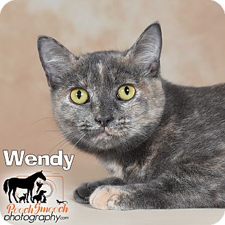 Domestic Shorthair Cat for adoption in Broadway, New Jersey - Wendy