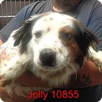 Adopt A Pet :: Jolly - baltimore, MD