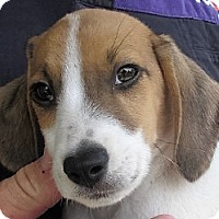 Adopt A Pet :: Ricky - Germantown, MD
