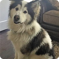 Adopt A Pet :: Traeger - Bruce Township, MI