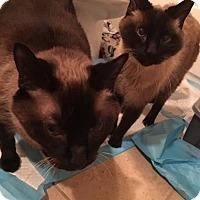 Adopt A Pet :: Doc & Sam - Hernando, MS