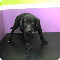 Adopt A Pet :: A1418386 - Houston, TX