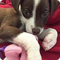 Adopt A Pet :: Trevor-Adoption Pending - Boulder, CO