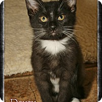 Adopt A Pet :: Davey - Shippenville, PA