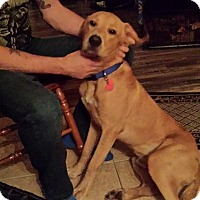 Adopt A Pet :: Clifford - Brattleboro, VT