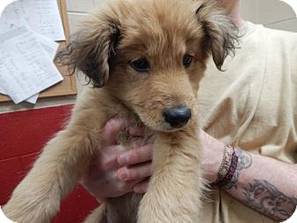 Hound (Unknown Type) Mix Puppy for adoption in Pikeville, Kentucky - Bobby