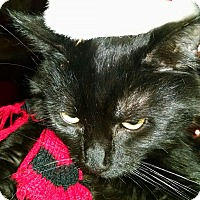 Adopt A Pet :: Zoey - brewerton, NY