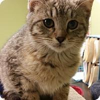 Adopt A Pet :: ABBY - Cleveland, MS