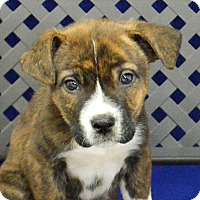 Adopt A Pet :: Clyde - Fort Davis, TX