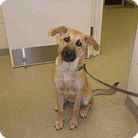 Adopt A Pet :: HAPPY - Vero Beach, FL