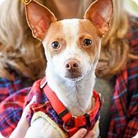 Adopt A Pet :: Eddie *Adoption Pending* - St Paul, MN