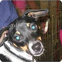 Adopt A Pet :: Nut Meg 'Meggie' - Youngsville, LA