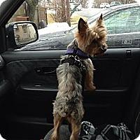 Adopt A Pet :: Cody - Mount Kisco, NY
